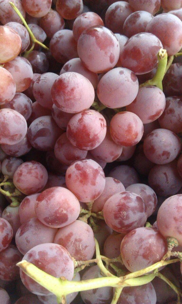 виноград ред глоб описание сорта фото вечеринке делайте