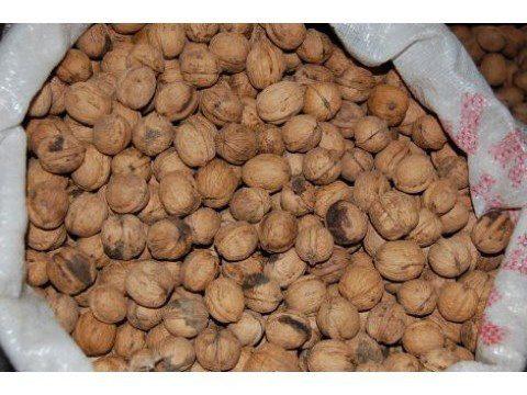 Кеннеди столкнулось грецкий орех продам в майкопе вытяжка