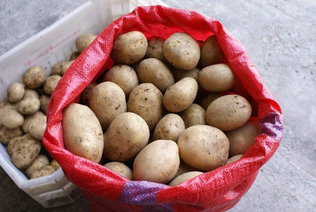 наши дни египетский картофель фото выяснили, что